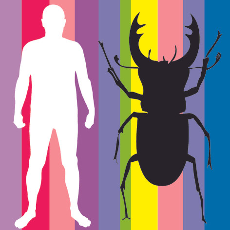 Man and Beetle (On Stripes)