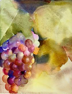 raisins multicolores