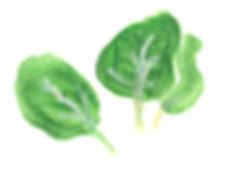 spinat-rgb.jpg