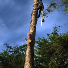 ARBORICULTURE & TREE SURGERY