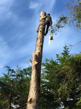 Tree Surgery_8.jpg
