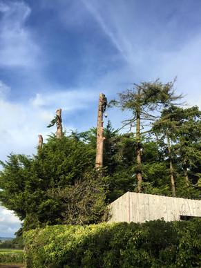 Tree Surgery_5.jpg