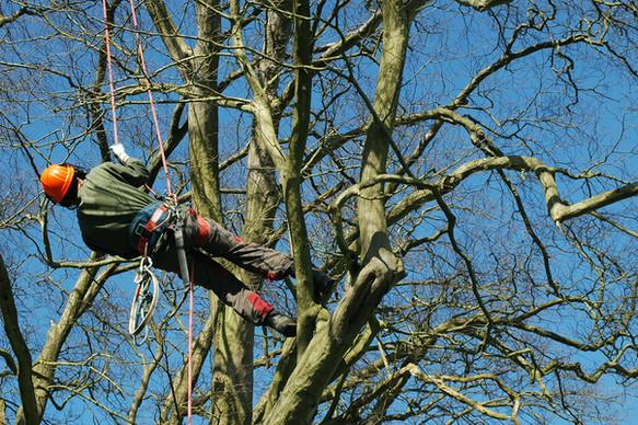 Tree Surgery_12.jpg