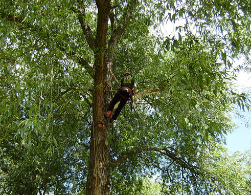 Tree Surgery_11.jpg