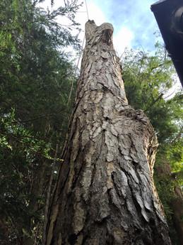 Tree Surgery_9.jpg