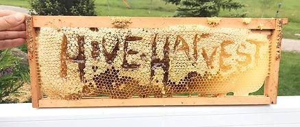 hive & harvest.jpg