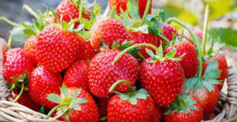 Les fraises, régulatrices du comportement alimentaire