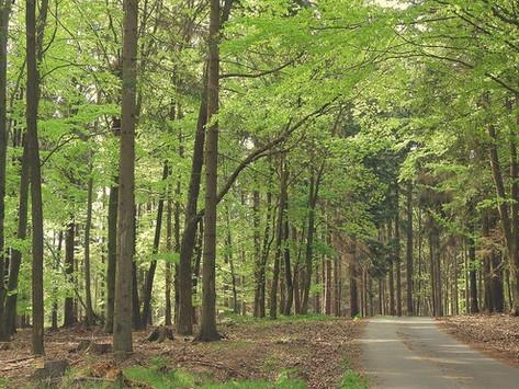 EN FORÊT, 500 IDÉES pour des escapades nature en France