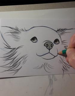 drawing pet