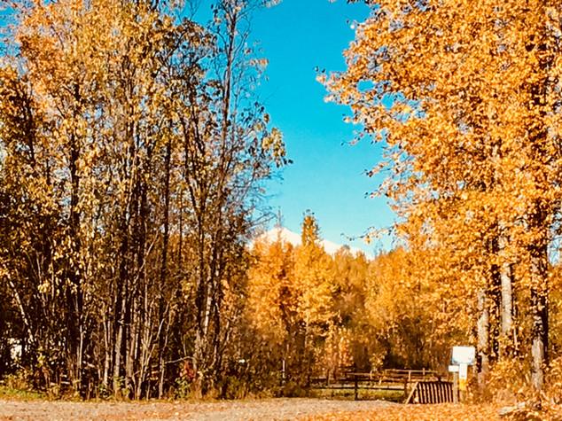 Trailside Cabins Walk to see Denali
