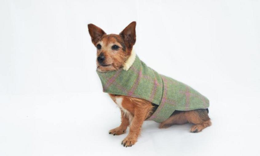 Raspberry Tweed Coat (Standard Breed)