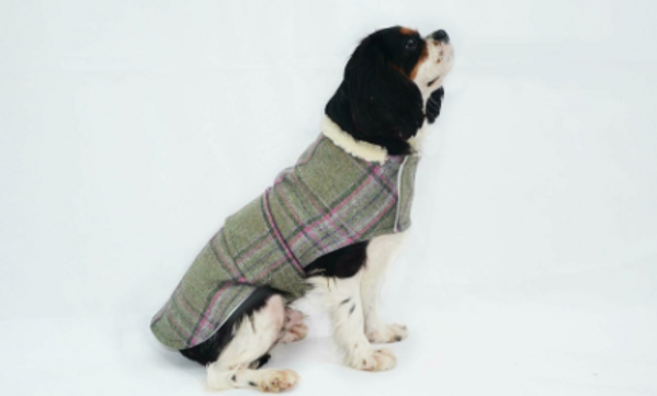 Knepp Dog Coat Range