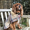 Thumbnail: Knepp Dog Coat Range