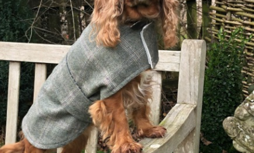 Town & Country Dog Coats