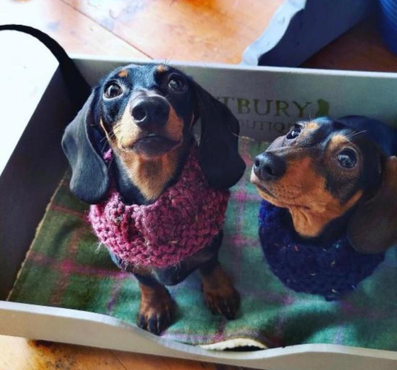 minkeys tweed dogs puppies matching dogc