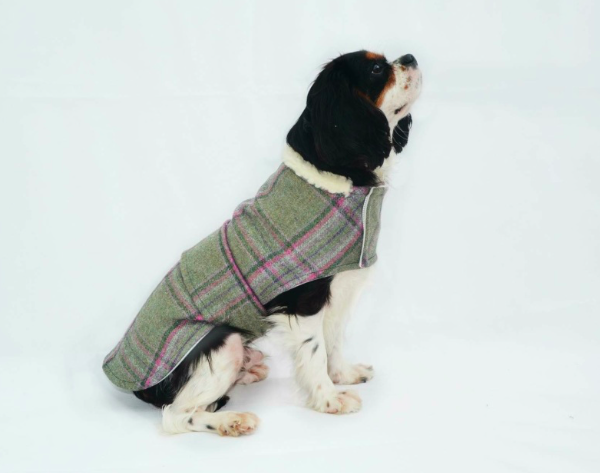 minks tweed dog coat