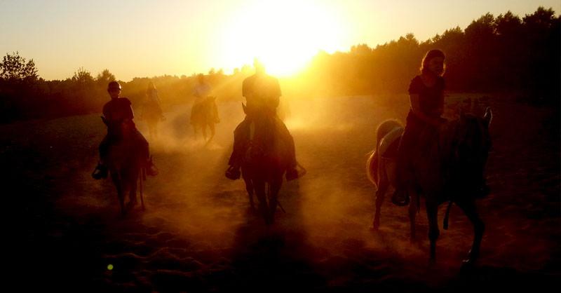 Why choose Sunshine and Daydreams Horseback Riding?