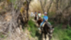 One Hour Trail Ride Gift Certiicate