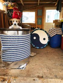 藍がめ 藍犬