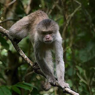 Shot in the Ecuadorian Amazon, I found t