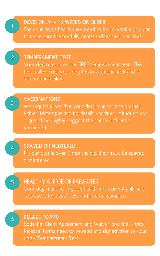Dog daycare requirements vaccine requirements age requiements