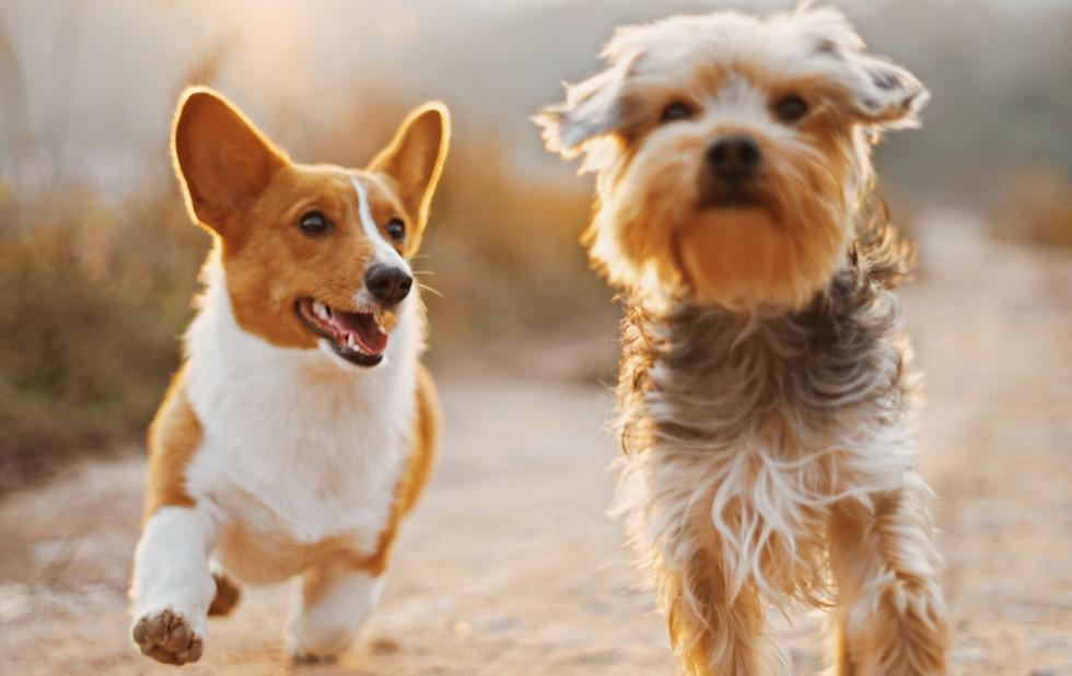 Dog Friends_edited_edited.jpg