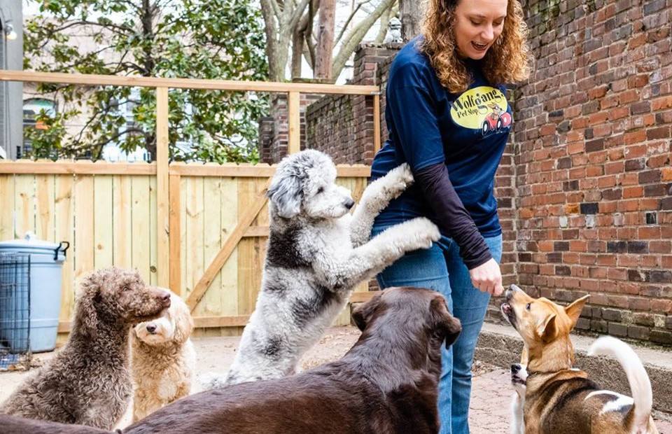beth and dogs 2.jpg