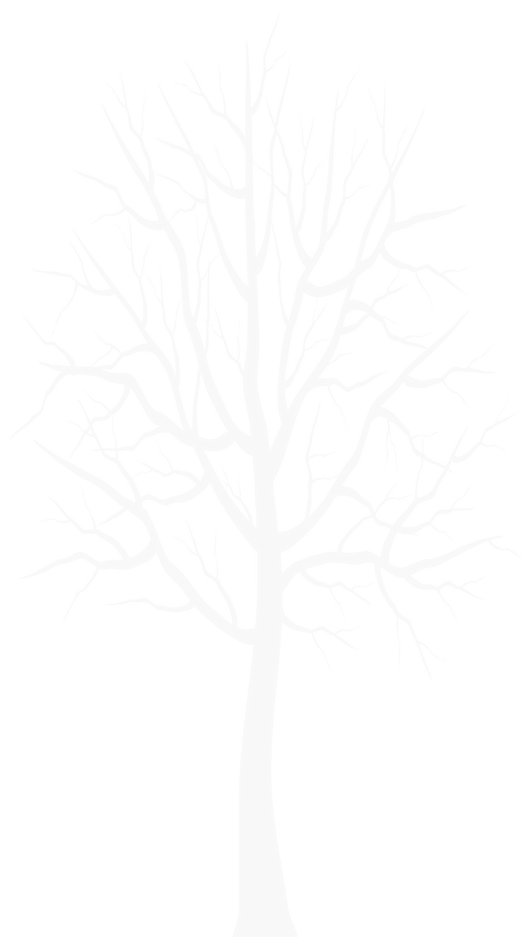 White_Winter_Tree_Transparent_PNG_Clip_A
