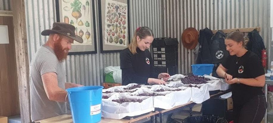 Ripe N Ready Cherry Farm Shop.jpg