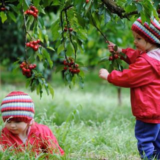 Cherry Farm Red Hill 4.jpg