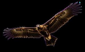Eagle Large.png