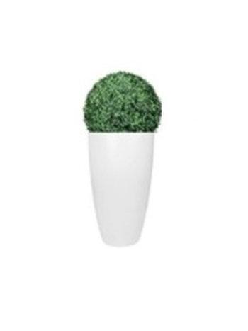 Buxus bloempot
