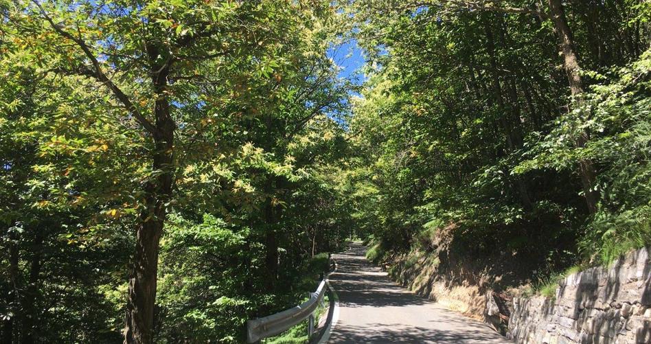 Weg führt hauptsächlich im Schatten