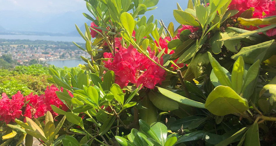 Blumen auf dem Weg Sentiero Romano