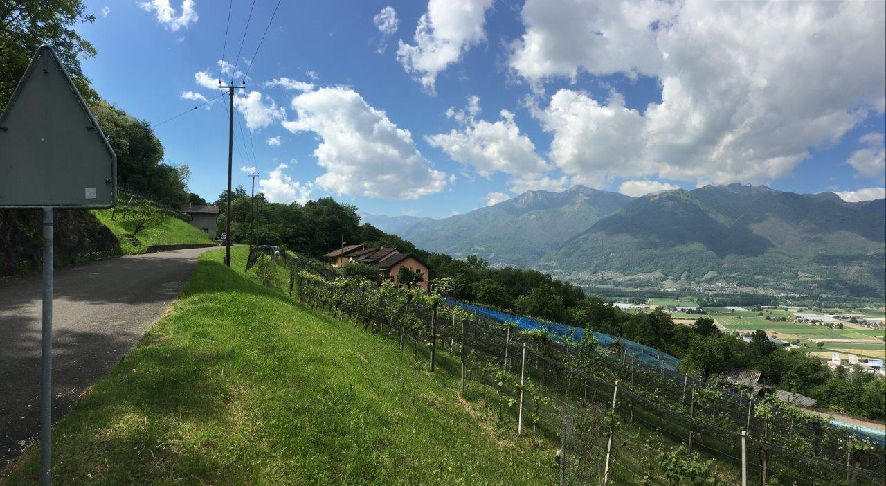 Blick auf Weinberge und die Magadino Ebene