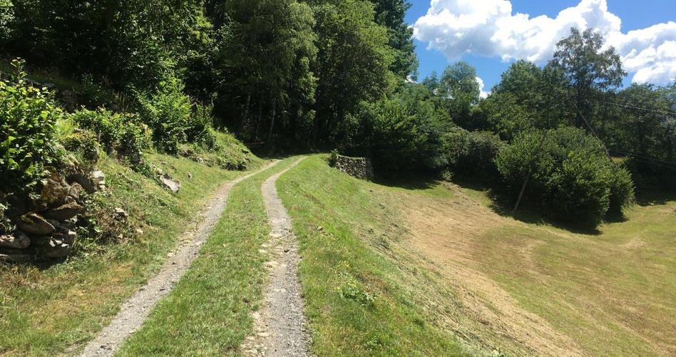 Schöner Naturweg mit angenehmer Steigung
