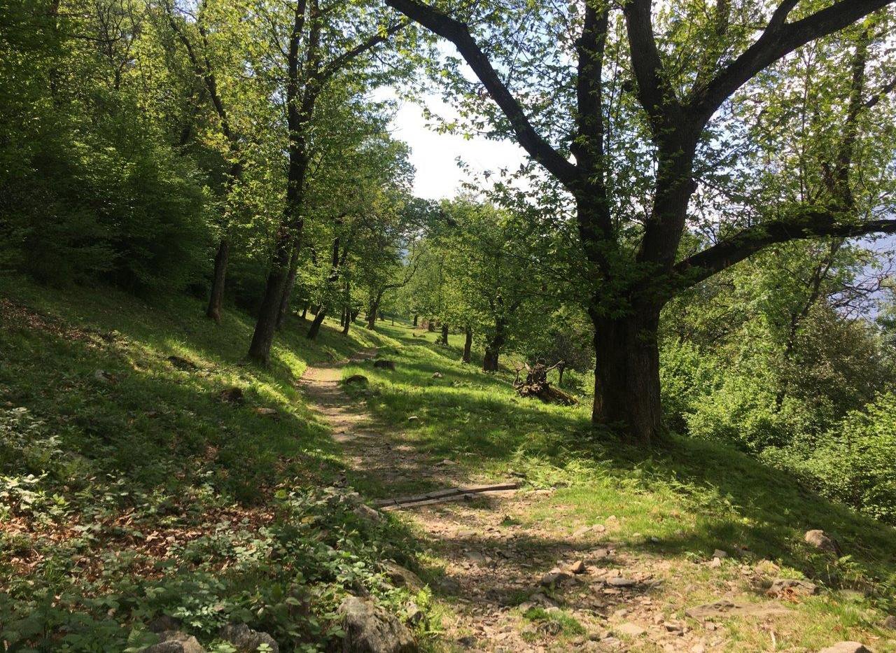 Waldweg Ausgangs Robasacco
