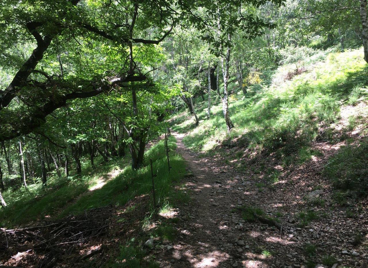Singletrain im Wald