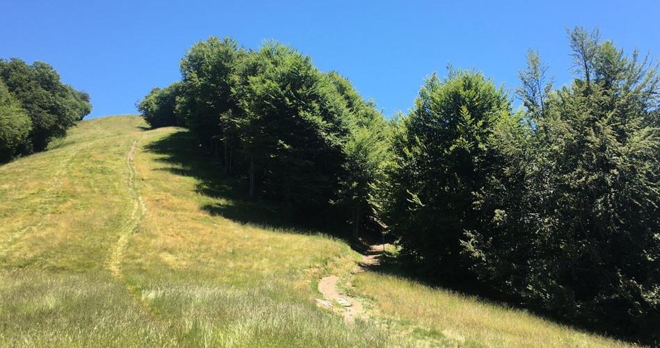 Trail zum Cardada