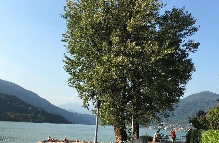 Weg entlang Lago di Lugano
