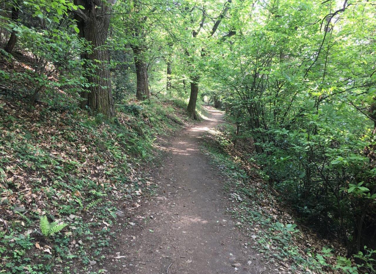 Waldweg kurz vor dem Monte Ceneri