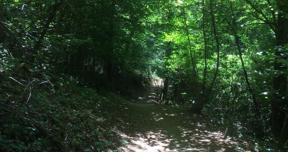 Trail vor Carona