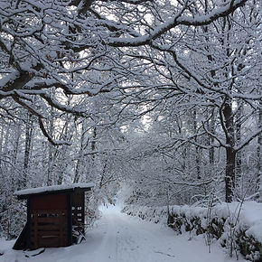 Skoven_kalder1.jpg