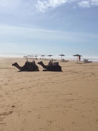 Strandliv