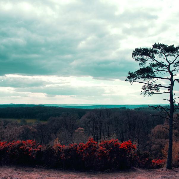 'Views of England'