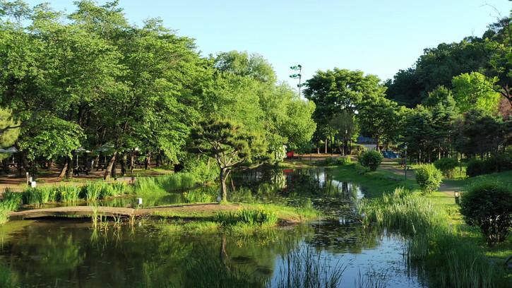 플랜테이션 숲 연못