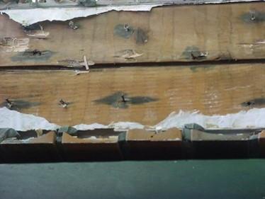 ドクター雨仕舞い 外壁 雨漏りの原因 釘跡