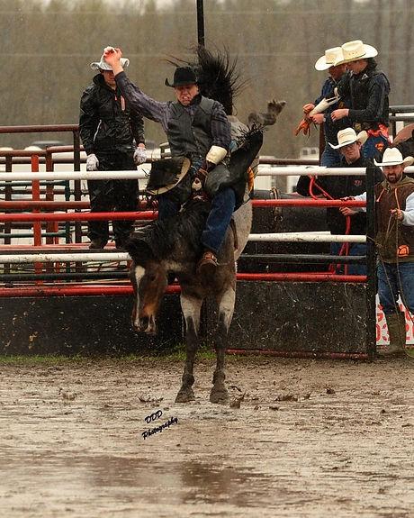bareback, rodeo