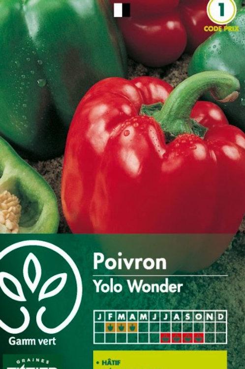 Graine poivron yolo wonder s.1 Gamm Vert (ref : w36158)