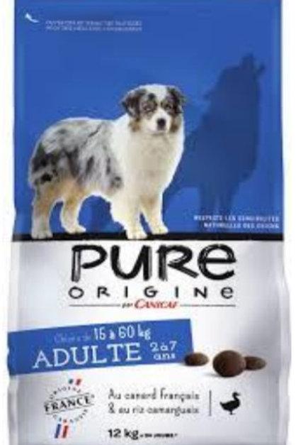Pure origne adulte+15  12k canicaf (ref : x60163)